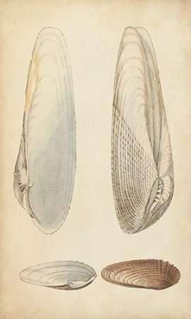 Marine Mollusk II Digital Print by Wood,Realism