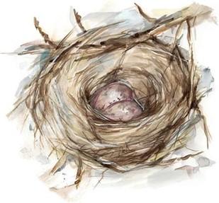 Bird Nest Study IV Digital Print by Harper, Ethan,Impressionism