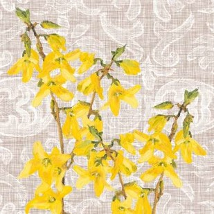 Flower Study Collection C Digital Print by Miller, Dianne,Decorative