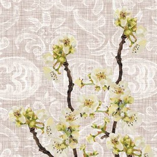 Flower Study Collection E Digital Print by Miller, Dianne,Decorative