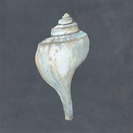 Shell on Slate IV Digital Print by Meagher, Megan,Impressionism