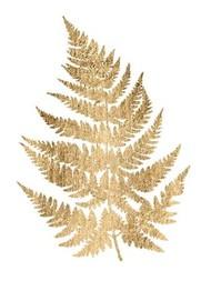 Graphic Gold Fern IV Digital Print by Studio W,Decorative