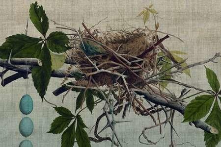 Nesting I Digital Print by Butler, John,Realism