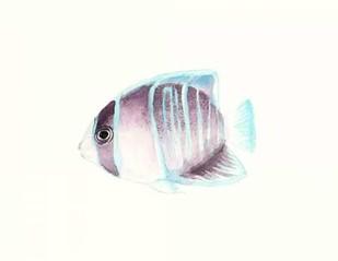 Watercolor Tropical Fish III Digital Print by McCavitt, Naomi,Decorative