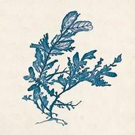 Indigo Algae III Digital Print by Goldberger, Jennifer,Decorative