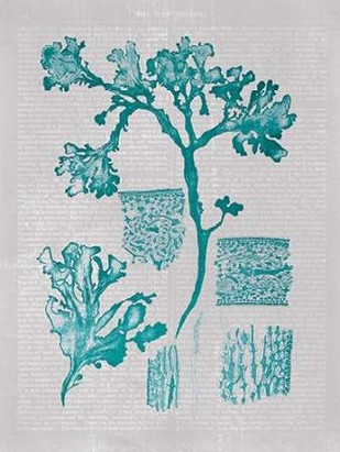 Teal Coral I Digital Print by Goldberger, Jennifer,Decorative