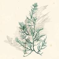 Vivid Algae IV Digital Print by Popp, Grace,Decorative