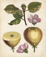Antique Pear Study IV Digital Print by Unknown,Realism