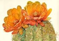 Cactus Blossoms II Digital Print by Otoole, Tim,Impressionism