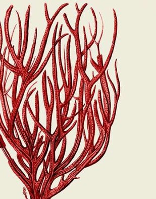Red Corals 2 c Digital Print by Fab Funky,Illustration