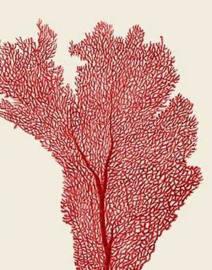 Red Corals 2 e Digital Print by Fab Funky,Illustration