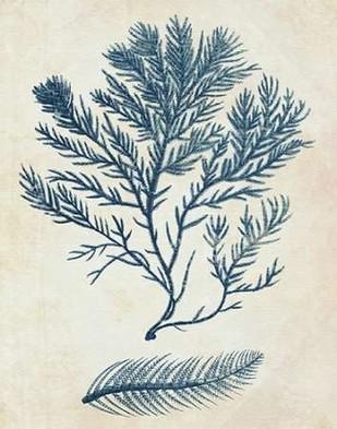 Indigo Blue Seaweed 2 c Digital Print by Fab Funky,Decorative