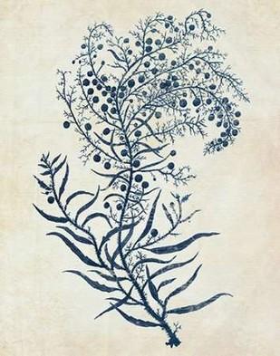 Indigo Blue Seaweed 3 c Digital Print by Fab Funky,Illustration