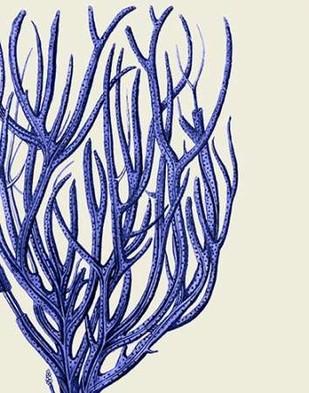 Blue Corals 2 c Digital Print by Fab Funky,Decorative