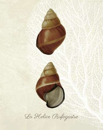 French Shell Print a Digital Print by Fab Funky,Decorative