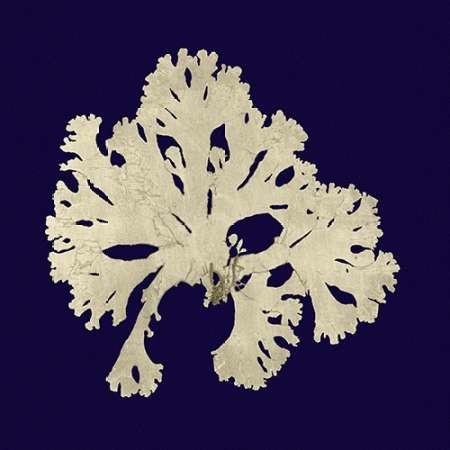 Seaweed on Navy IV Digital Print by Vision Studio,Decorative