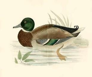 Morris Ducks I Digital Print by Morris,Decorative
