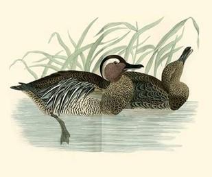 Morris Ducks II Digital Print by Morris,Decorative