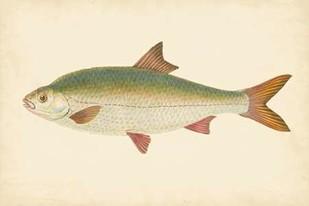 Donovan Antique Fish II Digital Print by Donovan,Decorative