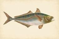 Donovan Antique Fish III Digital Print by Donovan,Decorative