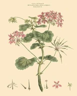 Blushing Pink Florals IV Digital Print by Miller, John,Decorative