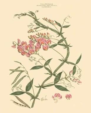 Blushing Pink Florals VI Digital Print by Miller, John,Decorative