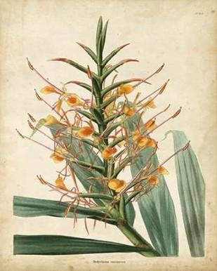 Tropical Delight I Digital Print by Edmonston-Douglas,Decorative