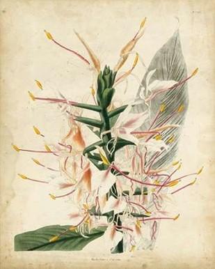 Tropical Delight II Digital Print by Edmonston-Douglas,Decorative