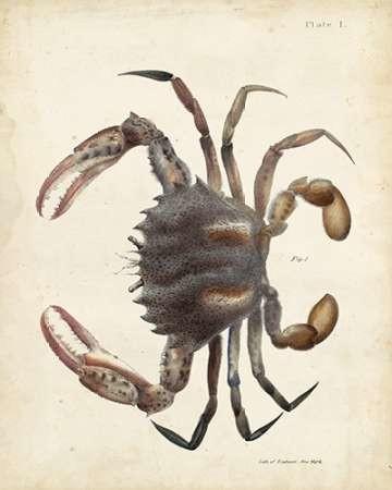 Vintage Crab I Digital Print by Dekay,Decorative