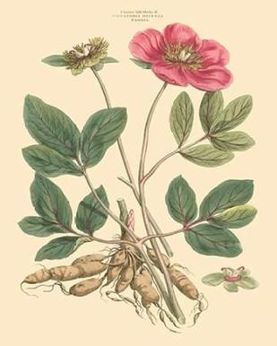 Blushing Pink Florals I Digital Print by Miller, John,Decorative