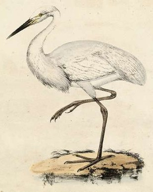 Antique Heron III Digital Print by Unknown,Realism