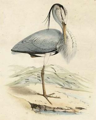 Antique Heron IV Digital Print by Unknown,Realism