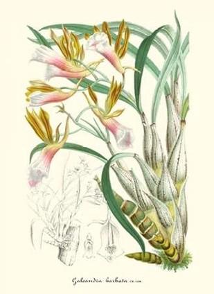 Lavender Orchids IV Digital Print by Stroobant, P.,Decorative