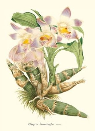 Lavender Orchids I Digital Print by Stroobant, P.,Decorative