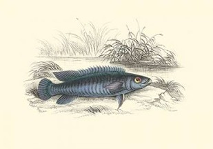 Lizars Game Fish III Digital Print by Lizars, W.H.,Decorative