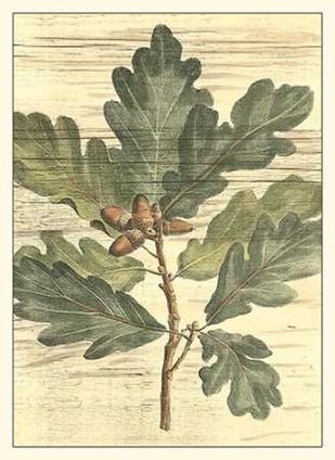 Weathered Oak Leaves I Digital Print by DeShayes, Gerard Paul,Decorative