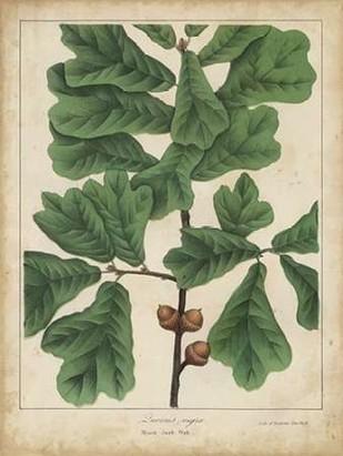 Oak Leaves and Acorns I Digital Print by Torrey, John,Decorative