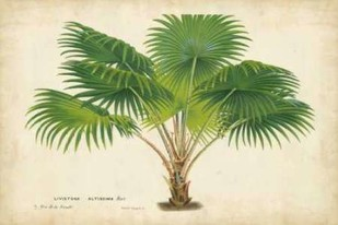 Palm of the Tropics V Digital Print by Van Houtteano, Horto,Realism
