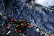 Untitled by Mohan L. Mazumder, Image Photography, Giclee Print on Hahnemuhle Paper, Blue color