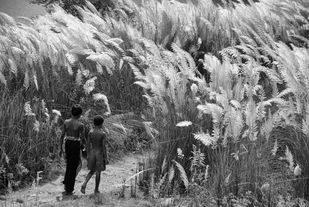 Kasher majhe by Subhajit Dutta, Image Photography, Digital Print on Paper, Gray color