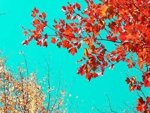 Autumn Tapestry I Digital Print by Stalus, Judy,Impressionism