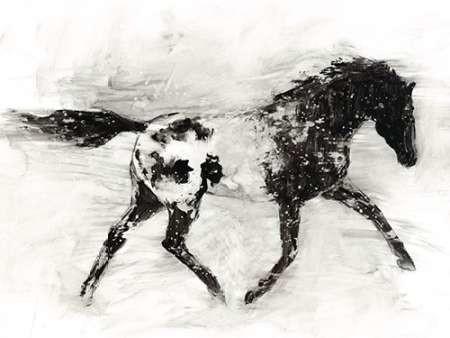 Rustic Appaloosa I Digital Print by Harper, Ethan,Illustration
