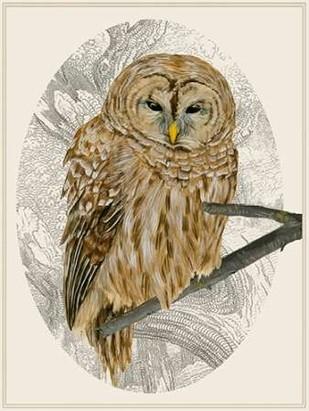 Barred Owl I Digital Print by Wang, Melissa,Impressionism