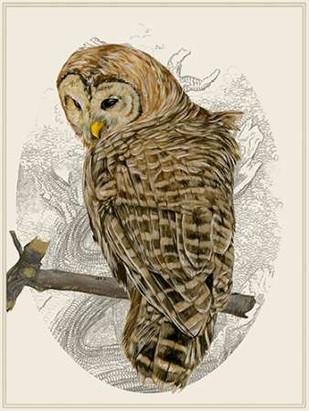 Barred Owl II Digital Print by Wang, Melissa,Impressionism