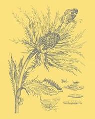 Natures Optimism I Digital Print by Vision Studio,Art Deco