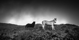 Black and White by Jayanta Roy, Image Photography, Digital Print on Archival Paper, Gray color