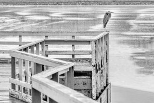 Alone by Dinesh Shringi, Image Photography, Digital Print on Canvas, Gray color