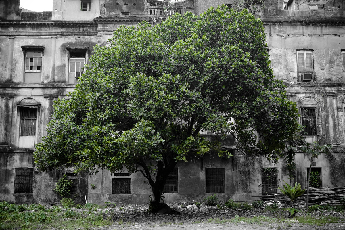 A Patch of Green by Gautam Vir Prashad, Image Photography, Giclee Print on Hahnemuhle Paper, Gray color