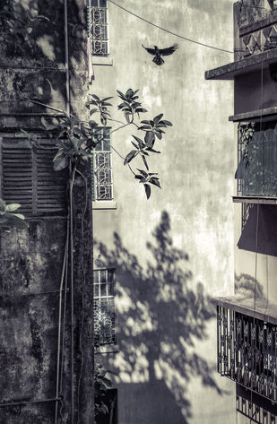 an idea of leaving by Arpan Ghosh, Image Photography, Digital Print on Paper, Gray color