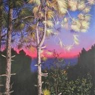 Glimpses of dawn